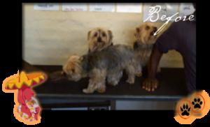 Villa Siesta Pet Retreat - Grooming