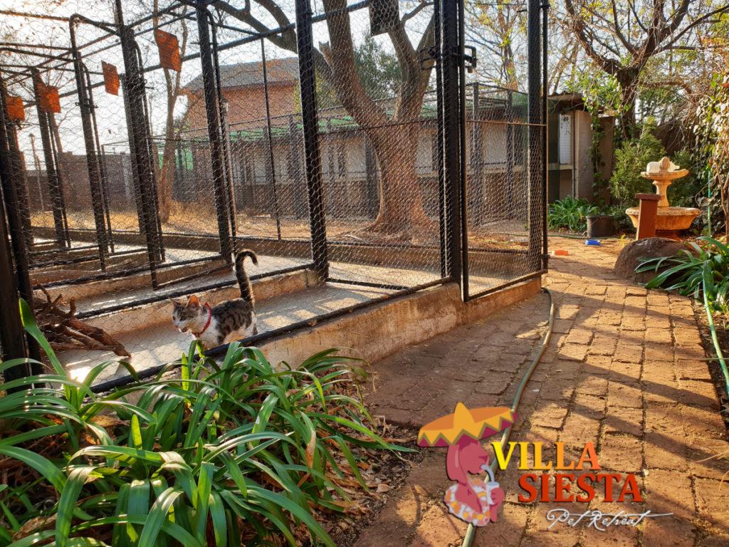 Villa Siesta Pet Retreat - Facilities - Cattery