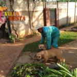Villa Siesta Pet Retreat - Kingdom