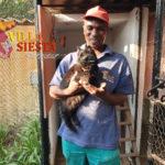 Villa Siesta Pet Retreat - The Team - Lucky