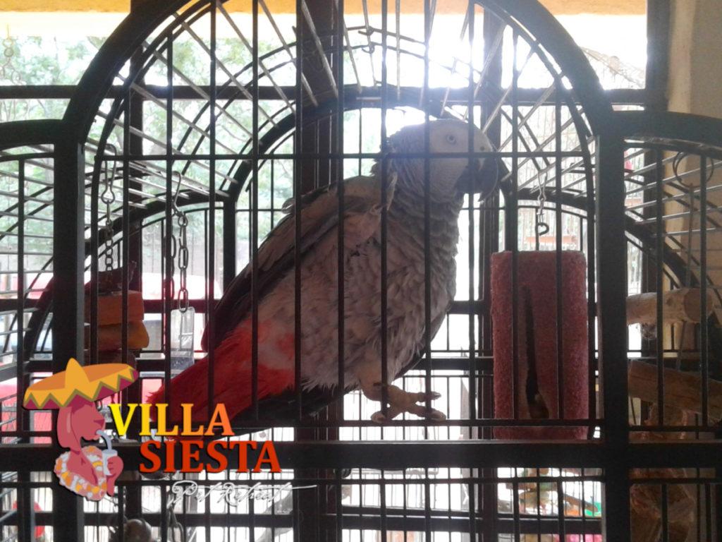 Villa Siesta Pet Retreat - Birds