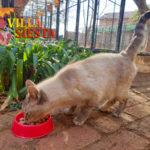 Villa Siesta Pet Retreat - Cattery
