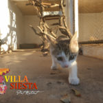 Villa Siesta Pet Retreat - Curious kitten