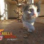 Villa Siesta Pet Retreat - Cattery exploring kitten