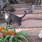 Villa Siesta Pet Retreat - Cattery happy kitty cats