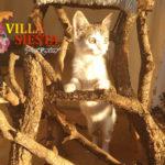 Villa Siesta Pet Retreat - Cattery - Playful kitten