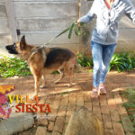 Villa Siesta Pet Retreat - Dogs going for exercise