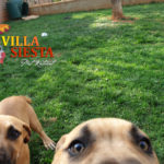 Villa Siesta Pet Retreat - Exercise Runs