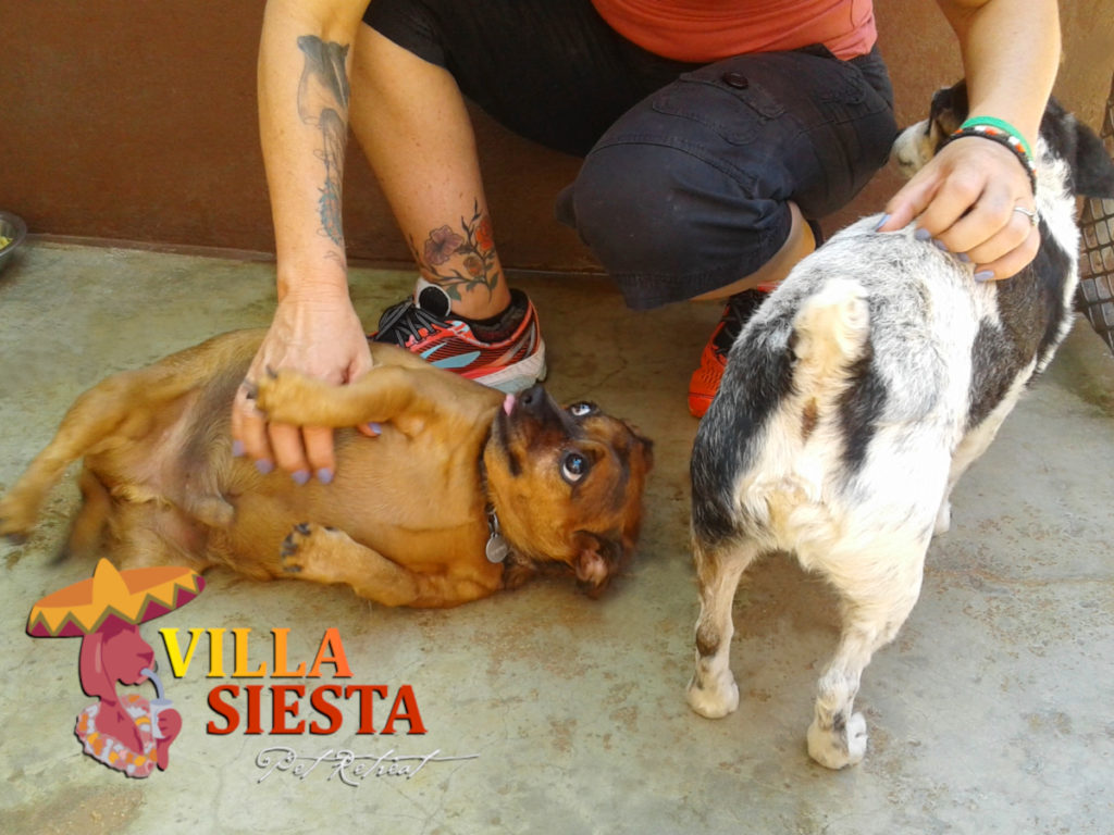 Villa Siesta Pet Retreat - dogs play in the kennel