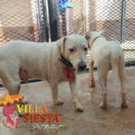 Villa Siesta Pet Retreat - Kennel happy dogs