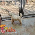 Villa Siesta Pet Retreat - Kennel