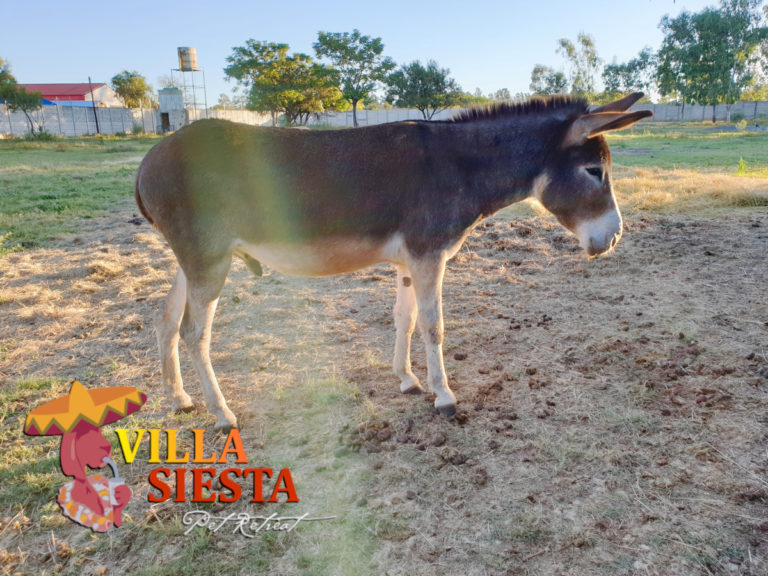 Villa Siesta Pet Retreat - Donkey Diaries - Bubbles