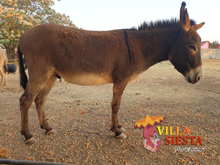 Villa Siesta Pet Retreat - Donkey Diaries - Junior