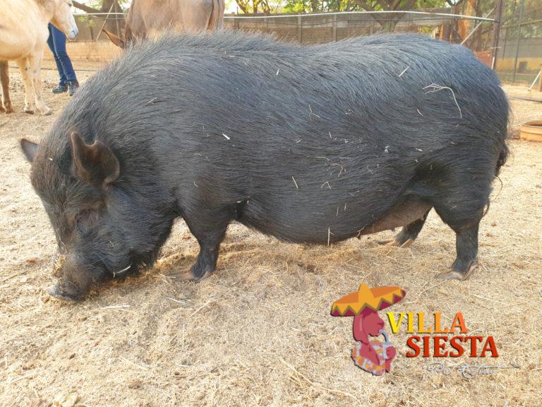 Villa Siesta Pet Retreat - Donkey Diaries - Molly