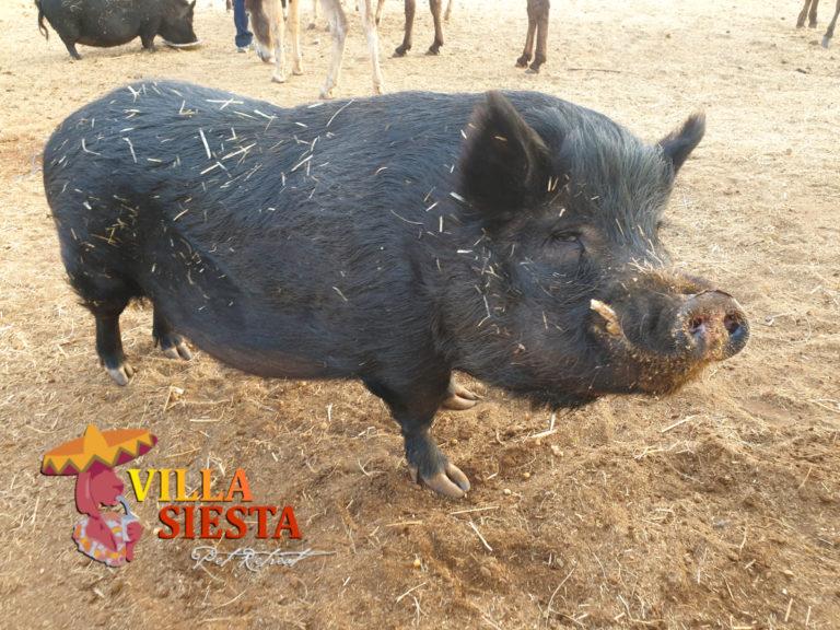 Villa Siesta Pet Retreat - Donkey Diaries - Wors