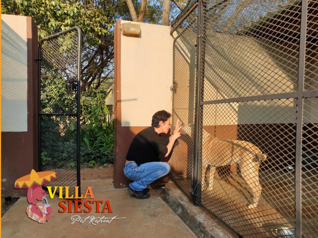 Villa Siesta Pet Retreat - Joy in kennel