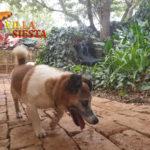 Villa Siesta Pet Retreat - Mojo taking a walk in the kennels