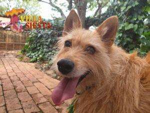 Villa Siesta Pet Retreat - Africanis happy in kennel