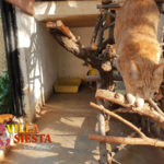 Villa Siesta Pet Retreat - cat happily climbing in cattery