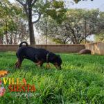Villa Siesta Pet Retreat - Miniature Pinscher