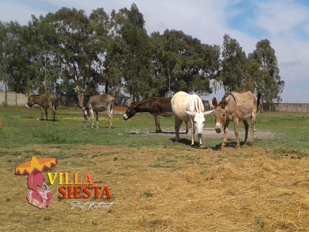 Donkey Diaries - animal rescue