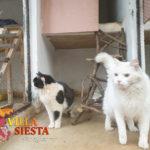 Villa Siesta Pet Retreat - Cattery - white cat and friend