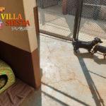 Villa Siesta Pet Retreat - happy dogs inside kennel