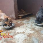 Villa Siesta Pet Retreat - puppies enjoying food