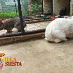 Villa Siesta Pet Retreat - cute rabbits