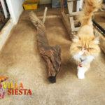 Villa Siesta Pet Retreat - Sweet Jessica Persian cat likes to climb
