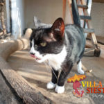 Villa Siesta Pet Retreat - cattery happy cat