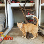Villa Siesta Pet Retreat - All cats have special climbing gyms