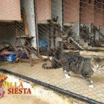 Villa Siesta Pet Retreat - Tabby cat in cattery