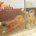 Villa Siesta Pet Retreat - Individual Attention