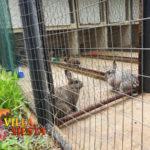 Villa Siesta Pet Retreat - Rabbits in the hutch