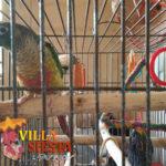 Villa Siesta Pet Retreat - Colourful Conure bird