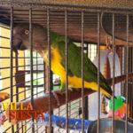 Villa Siesta Pet Retreat - Beautiful Conure