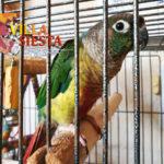 Villa Siesta Pet Retreat - colourful Conure in cage