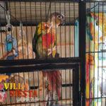 Villa Siesta Pet Retreat - colourful Conure climbing