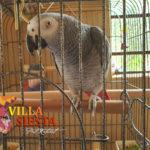 Villa Siesta Pet Retreat - Parrot in cage