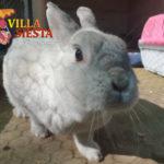 Villa Siesta Pet Retreat - Roger rabbit close up