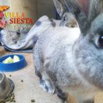 Villa Siesta Pet Retreat - beautiful bunny close up