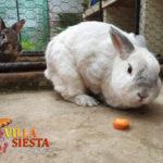 Villa Siesta Pet Retreat - cute bunnies