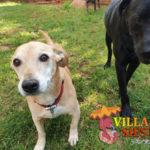 Villa Siesta Pet Retreat - Sweet Amber and Frankie play