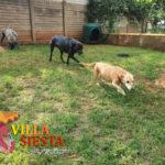 Villa Siesta Pet Retreat - Lacy, Frankie and Amber
