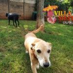 Villa Siesta Pet Retreat - Sweet Amber