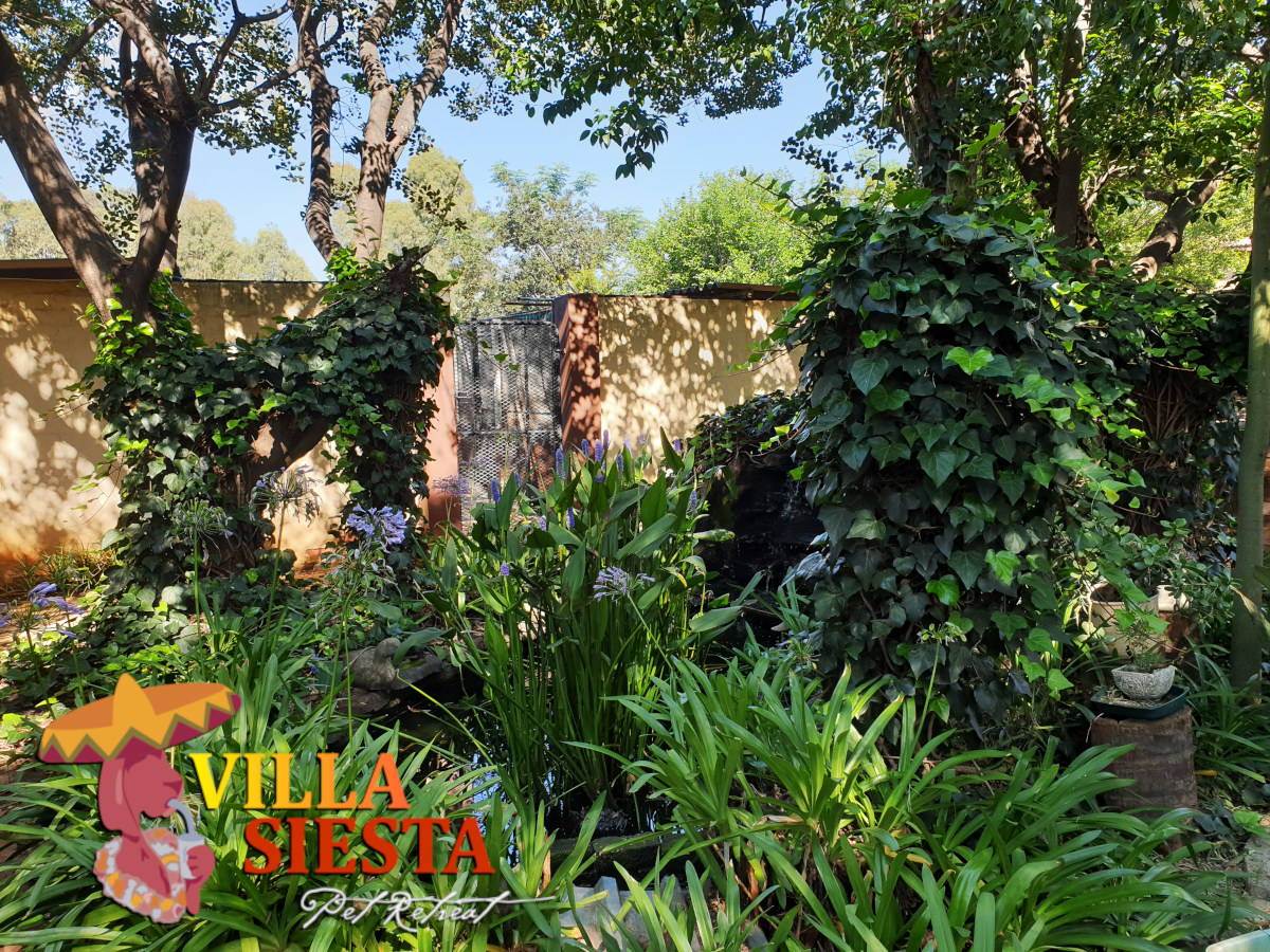 Villa Siesta Pet Retreat - Our beautiful grounds