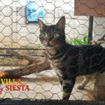 Villa Siesta Pet Retreat - Euphorio the cat