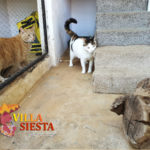 Villa Siesta Pet Retreat - Our cattery is made for comfort