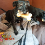 Villa Siesta Pet Retreat - Dotty and Floozy enjoying their treats